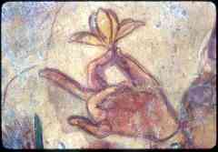 hand_and_flower_detail